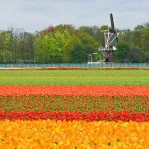 Bollenvelden_voorjaar_omgeving_Noordwijkerhout_7